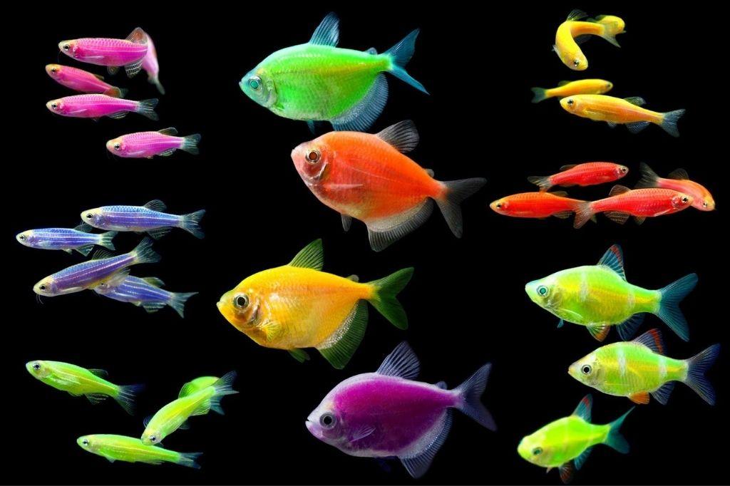 цвет рыбы в оформлении аквариума