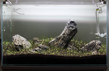 iwagumi-aquarium-set-up11