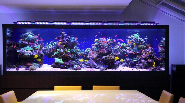 аквариум на 1000 литров