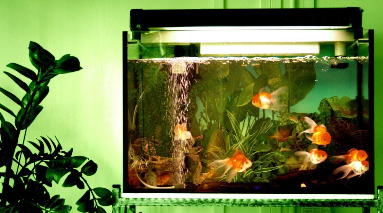 аквариум на 300 литров