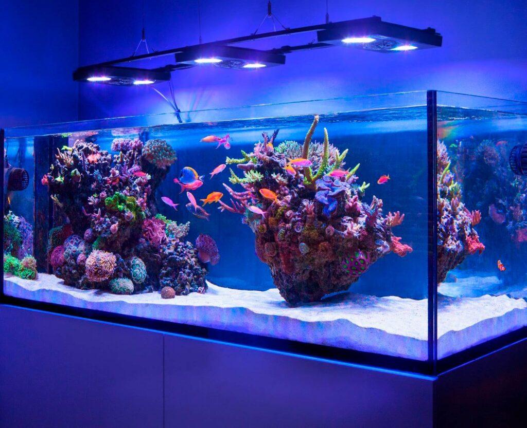 освещение в аквариуме 1000 л