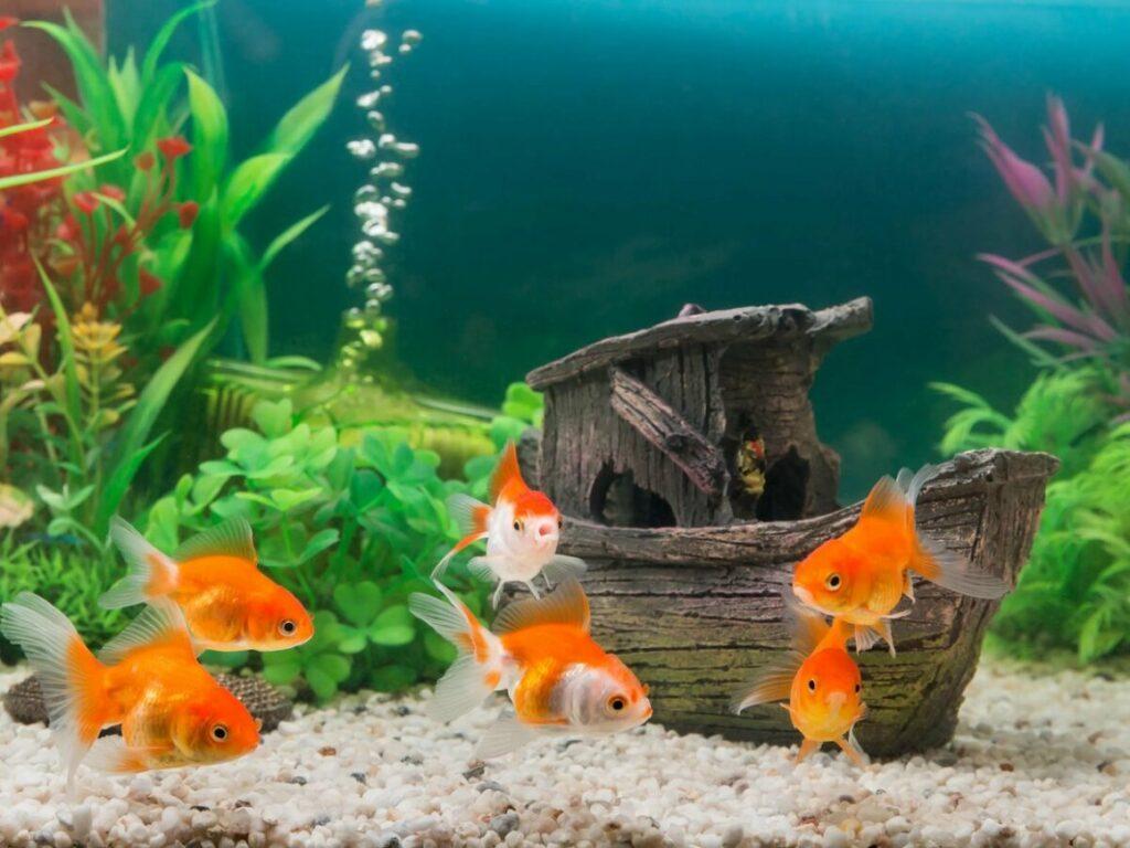 декорации в аквариуме 300 л