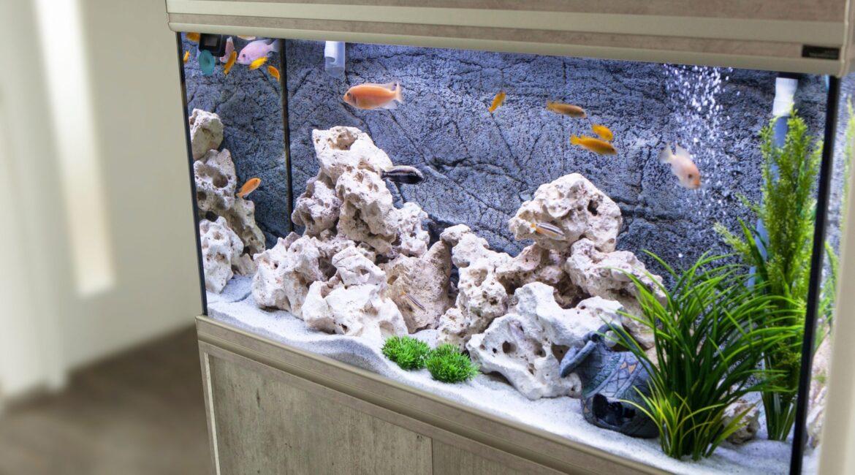 фоны для аквариумов
