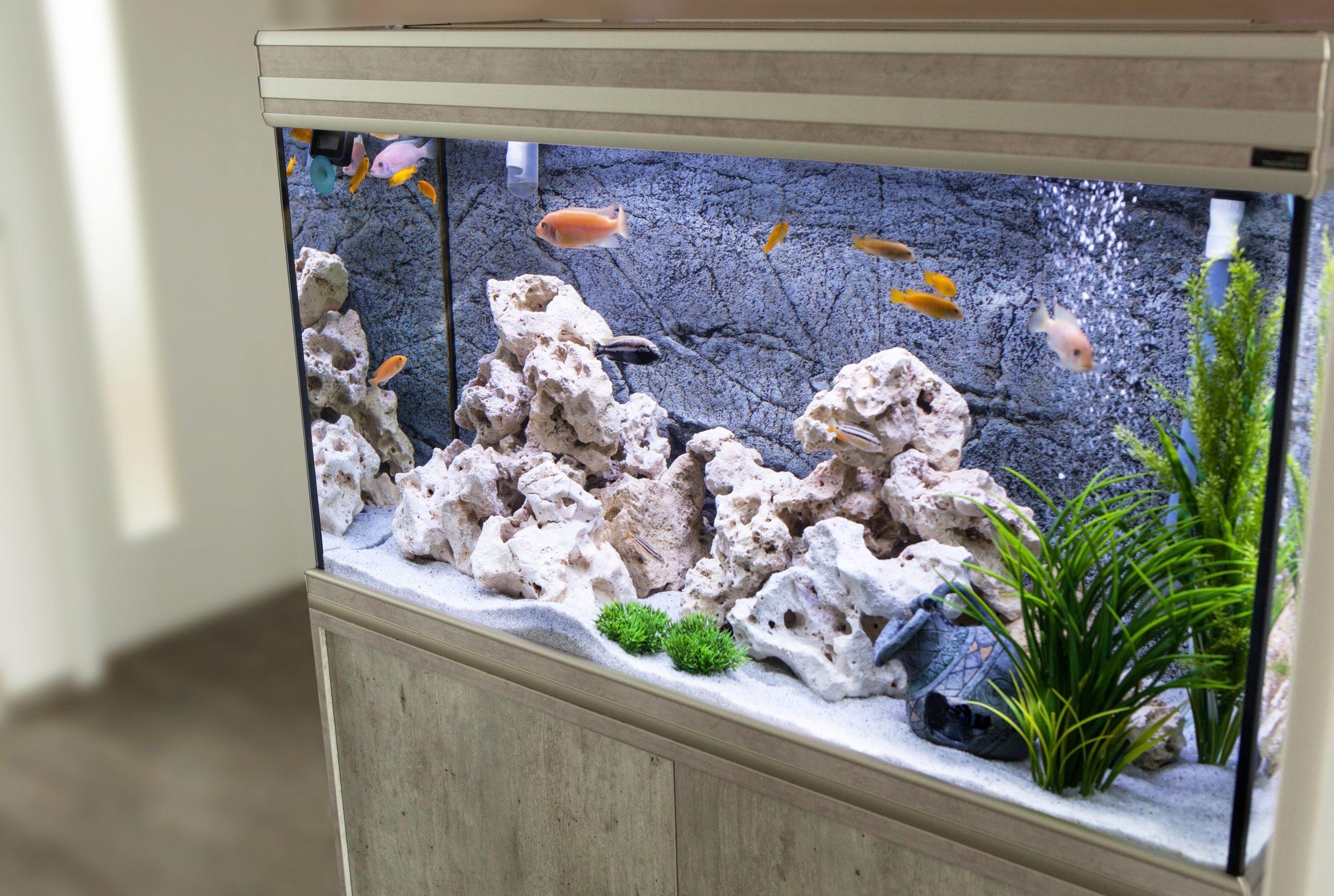 Роль фона для аквариума