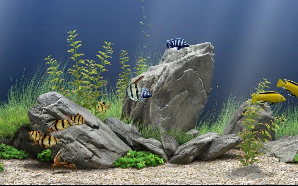 как выбрать камни в аквариум