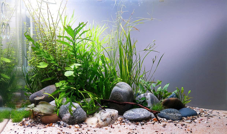 Зачем нужны камни в аквариум