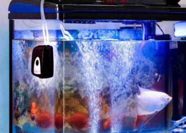 зачем нужен компрессор в аквариуме