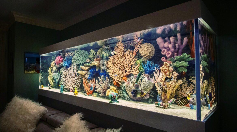 кораллы в аквариумах