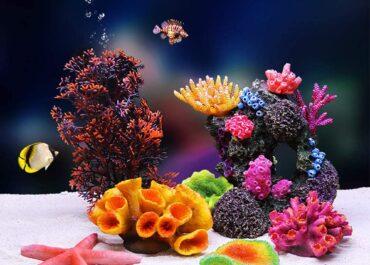 кораллы для аквариумов