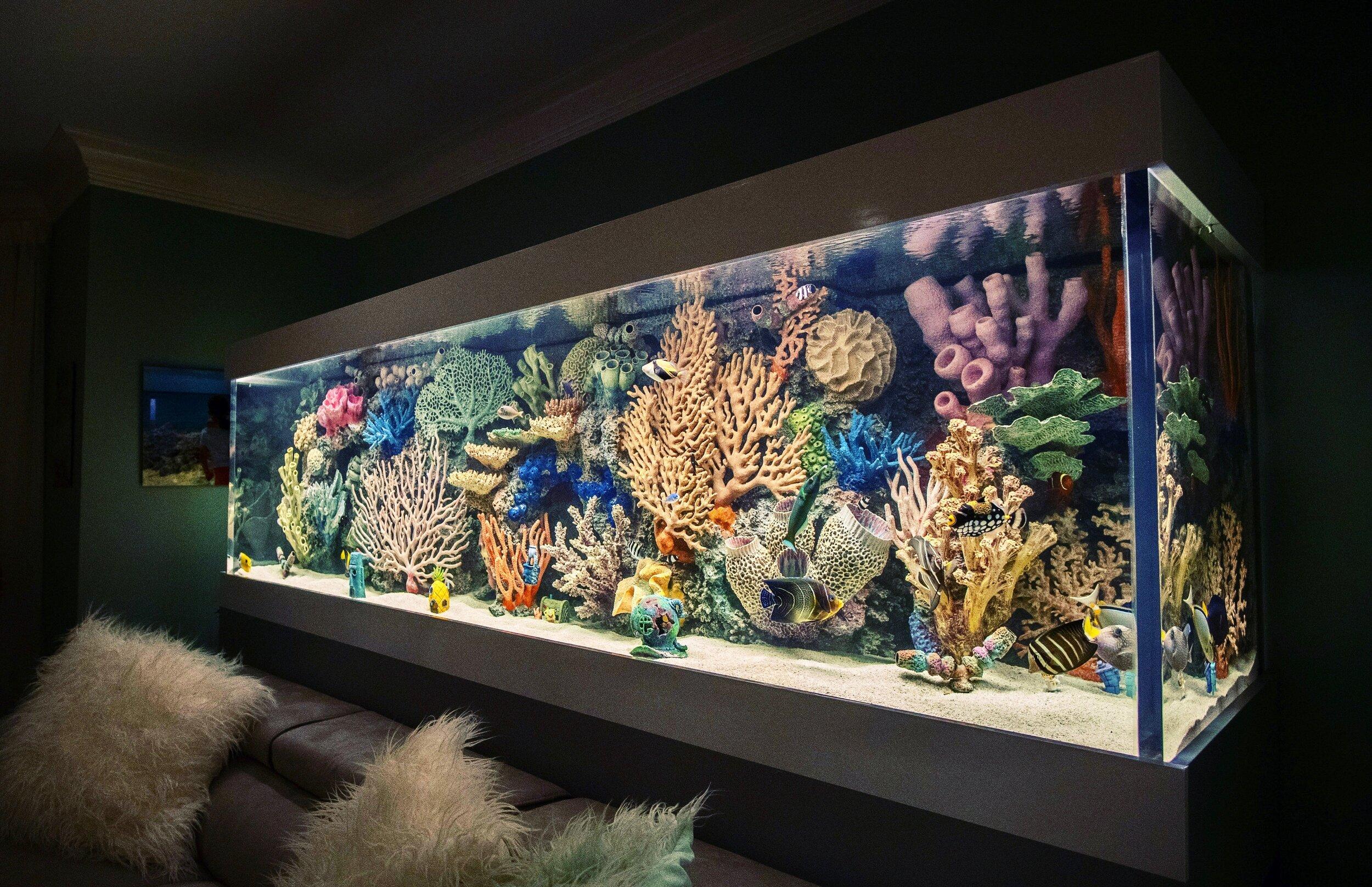 Кораллы в аквариум: особенности