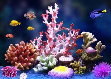 аквариумные кораллы