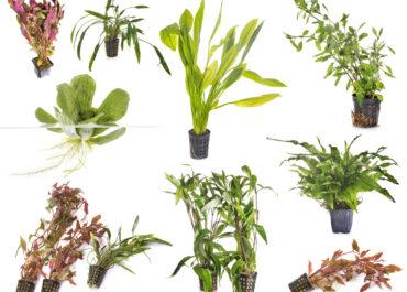 виды водорослей для аквариума