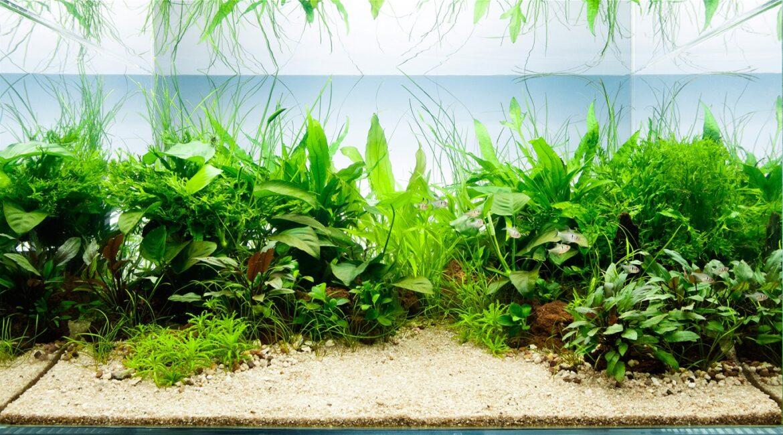 водоросли для аквариумов